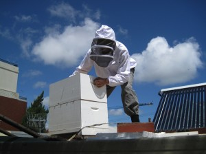 Inspecting a hive preched on a roof in Melbourne